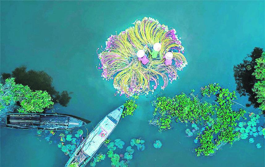 «Цветы на воде». Фото Drone Awards