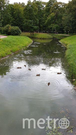 Очищенные пруды Таврического сада. Фото mytndvor, vk.com