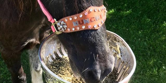 Лошадь, которой досталась самая изысканная посуда.