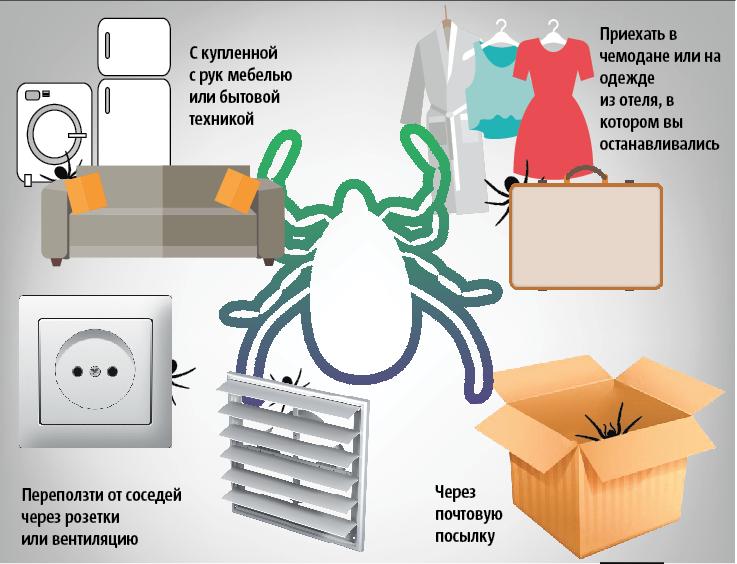 """Как клопы могут проникнуть в ваш дом. Фото Инфографика: Сергей Лебедев, """"Metro"""""""