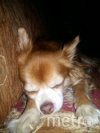"""Ещё одна """"собака Баскервилей"""" из Москвы. Гроза всех, пока не спит! Правда немного боится  котят, щенят, воробьёв, комаров и тёщу хозяина, но это же мелочи. Фото предоставлено читателем, """"Metro"""""""