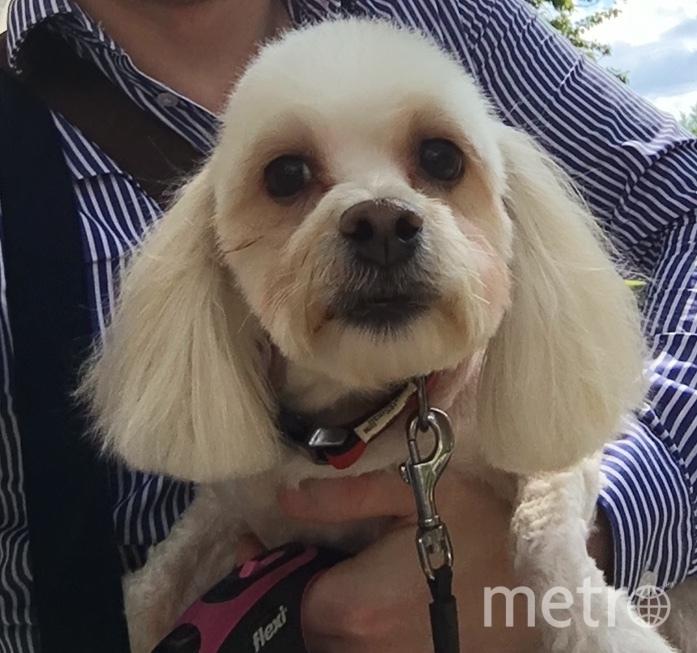 """Оказывается, эта милаха по имени Чаровница Черешенка тоже может быть """"собакой Баскервилей"""". Фото Рамис, """"Metro"""""""