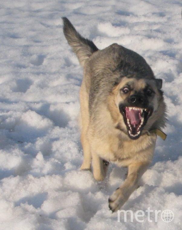 """А это добрейшая и ласковая собачка Паша. Фото Алексей, """"Metro"""""""