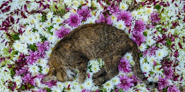 Кошка Дарья Сергеевна.