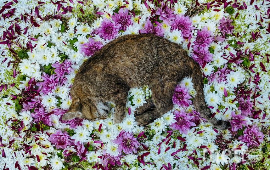 Кошка Дарья Сергеевна. Фото Мария Ионова-Грибина