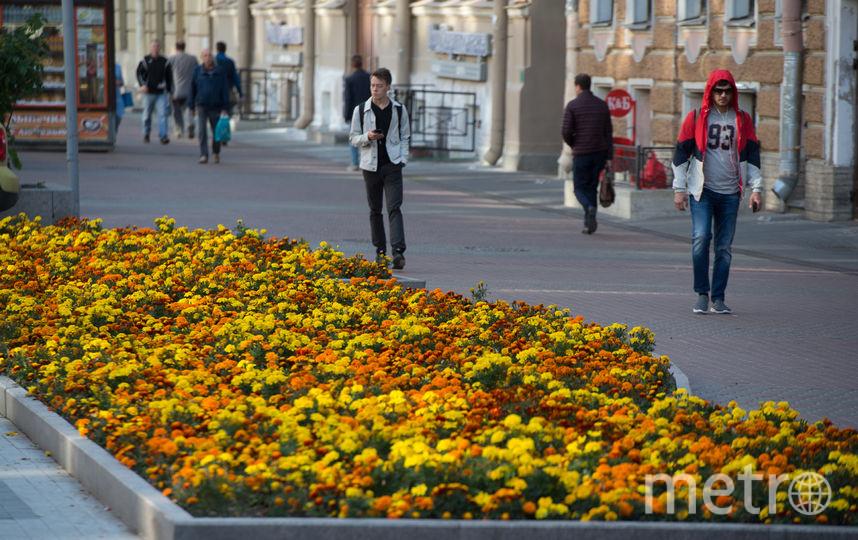 """Подобные – сложные и очень эффектные! – цветочные композиции, пишут в соцсетях петербуржцы, появились не только у главных достопримечательностей, но и в обычных дворах и скверах. Фото Святослав Акимов, """"Metro"""""""