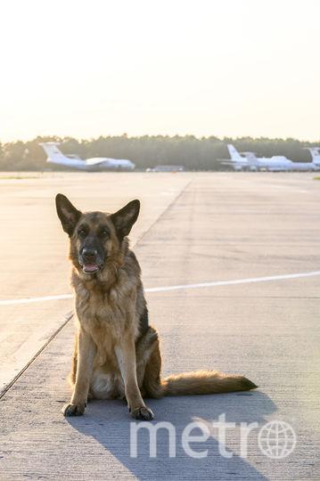 В Подмосковье начались съёмки фильма «Пальма» о собаке, которая два года прожила в аэропорту, ожидая оставившего её там хозяина. Фото Марс Медиа