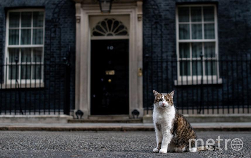Кот-мышелов. Ларри– кот, который служит главным мышеловом в резиденции британских премьеров на Даунинг-стрит, 10. Фото Getty