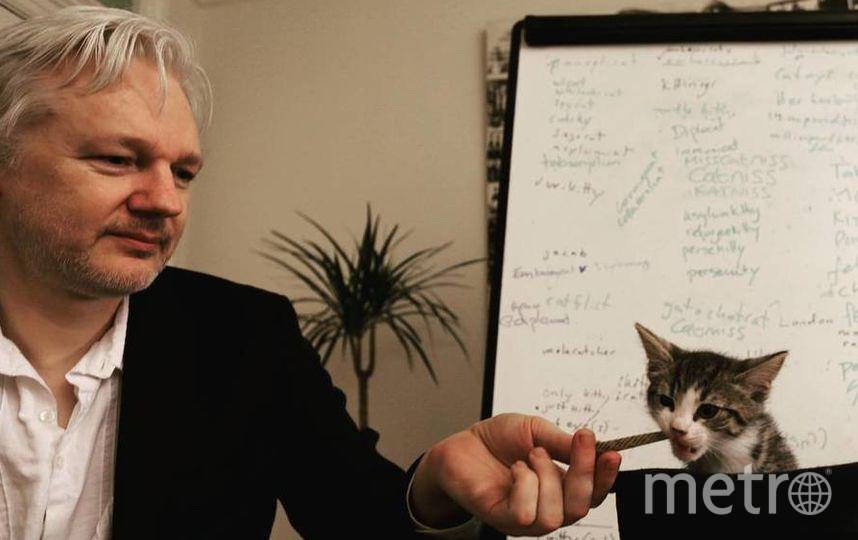 Кот-политик. Джеймс попал к основателю WikiLeaks Джулиану Ассанжу в десятинедельном возрасте. Фото Скриншот @embassycat