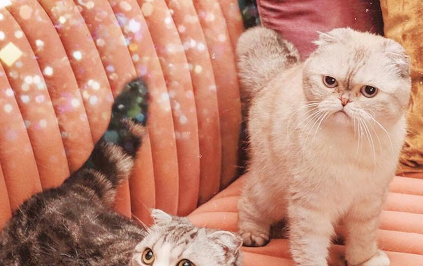 Кошки – звёзды клипов. Фото Скриншот @tealor_swift