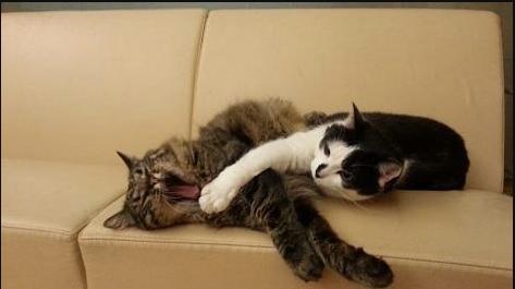Коты Кузя и Мурис – помощники мэра.