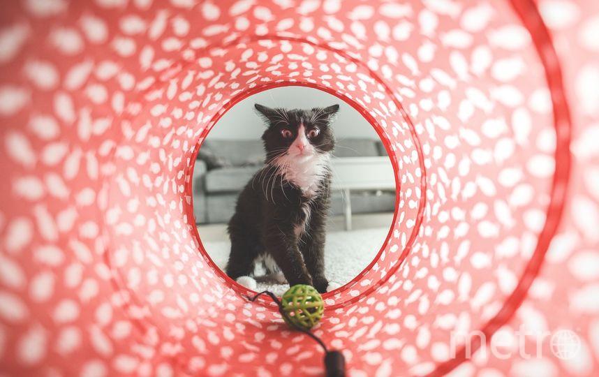 8 августа отмечается всемирный день кошек. Фото pixabay.com