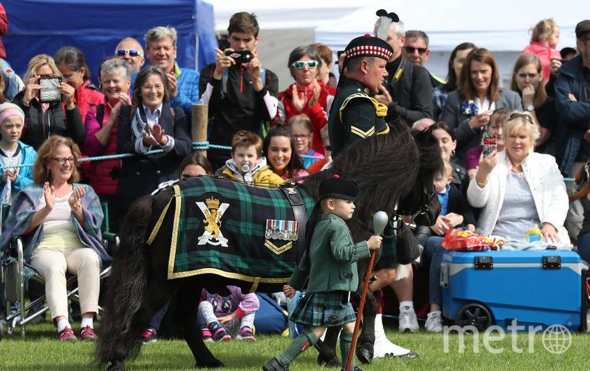 Шетландский пони - талисман Королевского полка в Шотландии. Фото Getty
