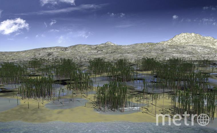 Реконструкция внешнего вида леса. Фото Zhenzhen Deng | Current Biology
