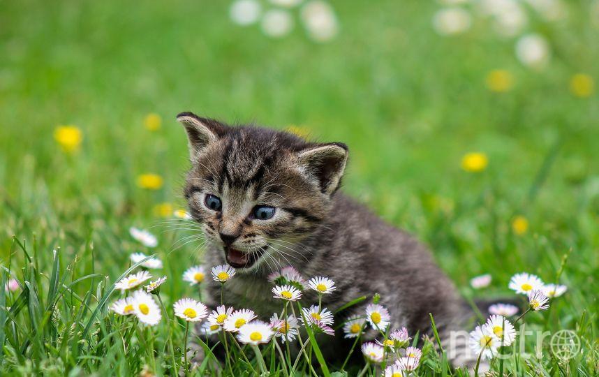 Вадим Косаковский очень хочет кота, но нужно выполнить условие папы. Фото https://pixabay.com/