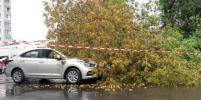За два дня штормового ветра в Москве повреждены 23 машины