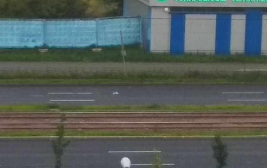 """Таксист сбил гусыню, переводившую своих птенцов. Фото https://vk.com/spb_today, Саня Питерский, """"Metro"""""""