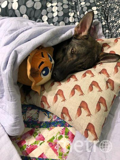 """Это Паркер, его взяли из приюта. И он самый добрый пёс в мире! Фото Наталья, """"Metro"""""""