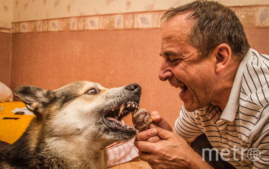 """Это Джерри.10 лет назад его щенком нашли на улице. Был он таким маленьким, как мышонок из известного мультфильма, вот и назвали его соответственно. """"Мышонок"""" вырос и превратился в прекрасного пса - доброго и очень умного.  Но если надо, может показать и зубки. Фото Анатолий, """"Metro"""""""