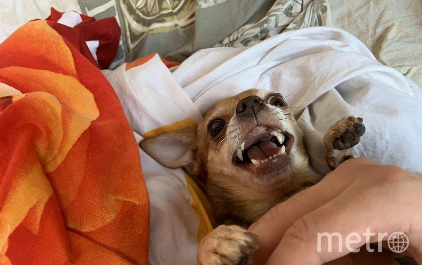"""Эту красотку зовут Мими. Она очень активная, и иногда в ней тоже просыпается """"собака Баскервилей"""". Фото Иван, """"Metro"""""""