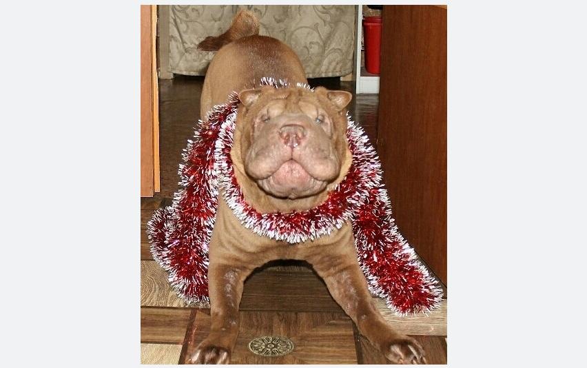 """Пёс Кокос. Все его боятся, но на самом деле он ужасно добрый. Фото Владимир, """"Metro"""""""