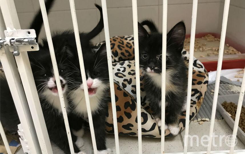 """Котята остаются в ветеринарной клинике. Фото предоставлено героиней материала, """"Metro"""""""