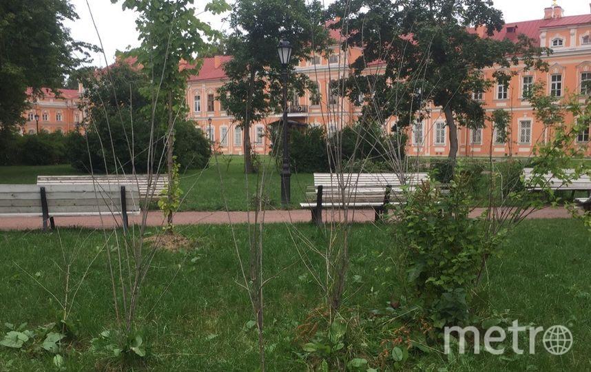 В Петербурге заметили массовую гибель деревьев. Фото mytndvor, vk.com