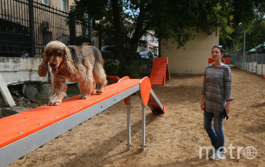 Яна считает, что хозяина можно штрафовать, только если он не убрал за своей собакой. Фото Василий Кузьмичёнок