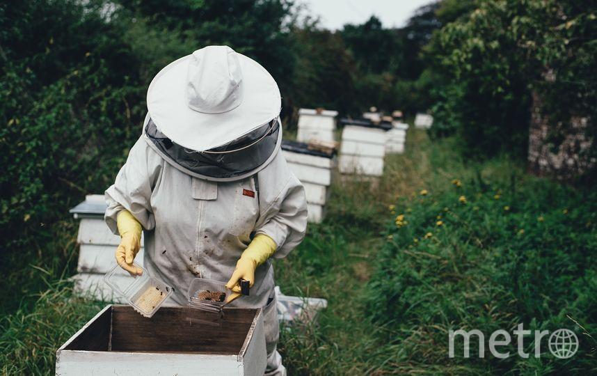 Медовый спас отмечается в этом году 14 августа. По традиции с этого дня пасечники начинают собирать мёд. Фото Pixabay