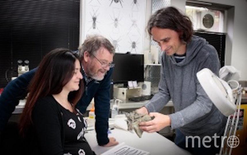 В Новой Зеландии обнаружили окаменелые останки гигантского пингвина размером почти со взрослого человека. Фото canterbury museum