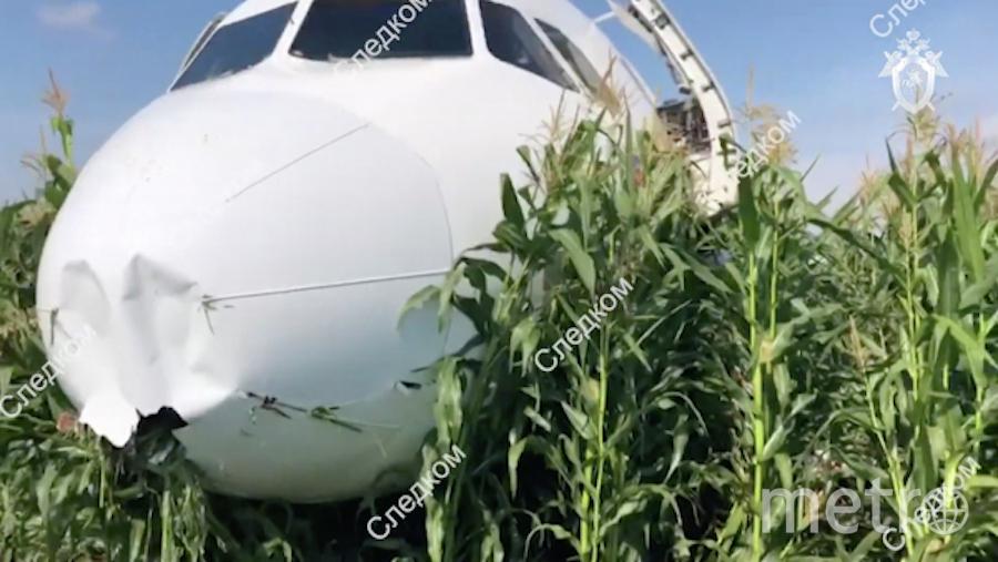Попадание чаек в двигатели привело к перебоям и аварийной пасадке. Фото РИА Новости