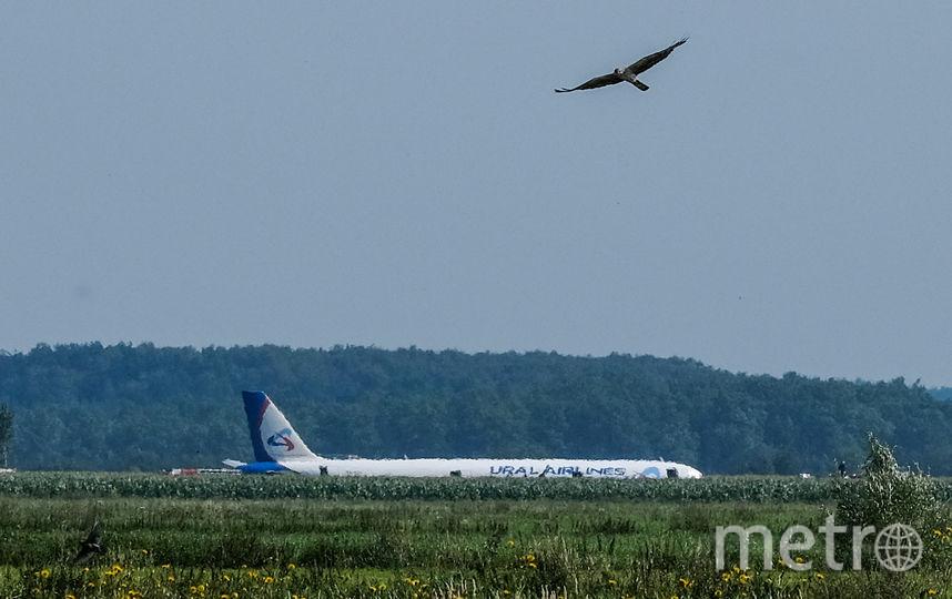"""Самолёт сел в кукурузном поле недалеко от аэропорта """"Жуковский"""". Фото AFP"""