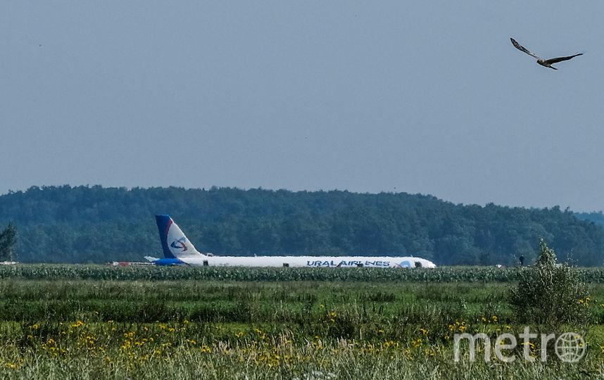 Airbus A-321 сел в кукурузном поле из-за попадания чайки в двигатель. Фото AFP