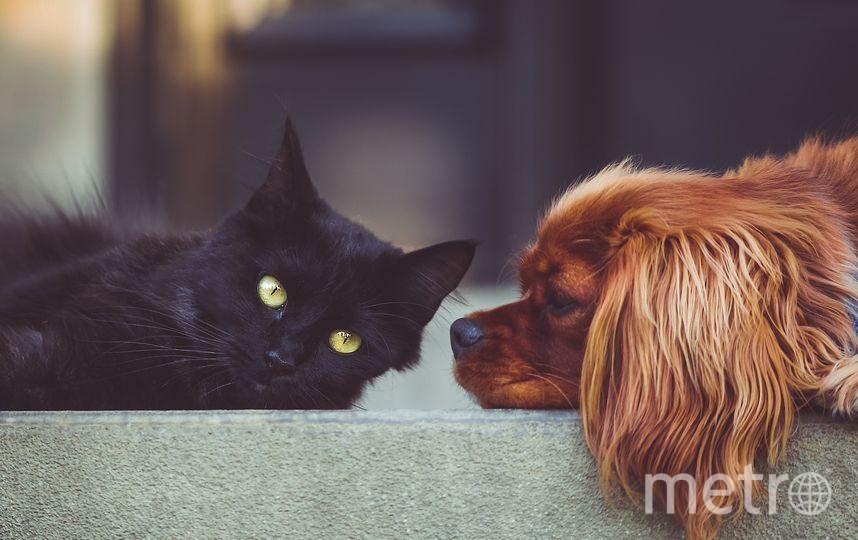"""На фестивале """"Друг для друга"""" своих хозяев будут ждать 250 кошек и собак. Фото pixabay.com"""
