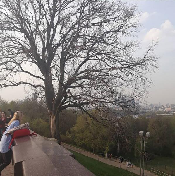 """Туристы часто делали фото на фоне дерева из """"Бригады"""". Фото скриншот instagram.com/leonid_s_ivanov/"""