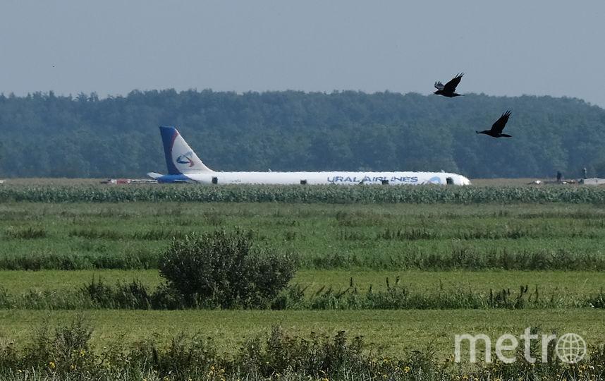 Самолёт Airbus A321 при взлёте столкнулся со стаей чаек. Фото AFP
