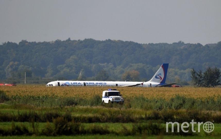 Самолёт, севший на кукурузном поле. Фото РИА Новости