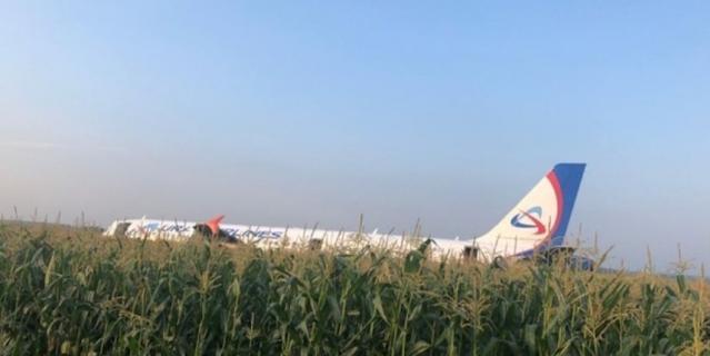 Самолёт Airbus A321 посреди кукурузного поля.