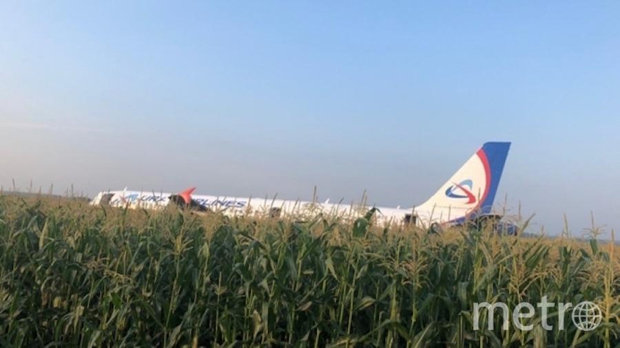 Самолёт Airbus A321 посреди кукурузного поля. Фото РИА Новости