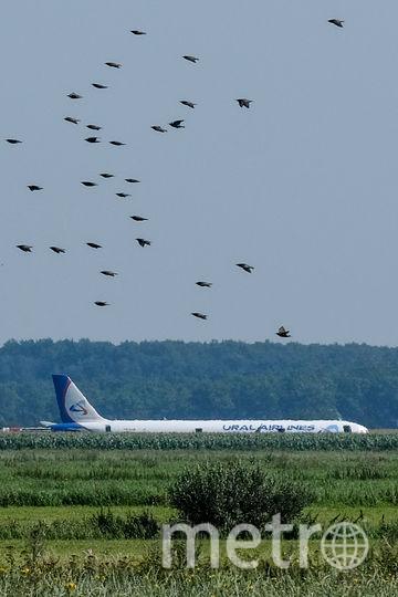 Инцидент произошёл утром в четверг, 15 августа. Фото AFP