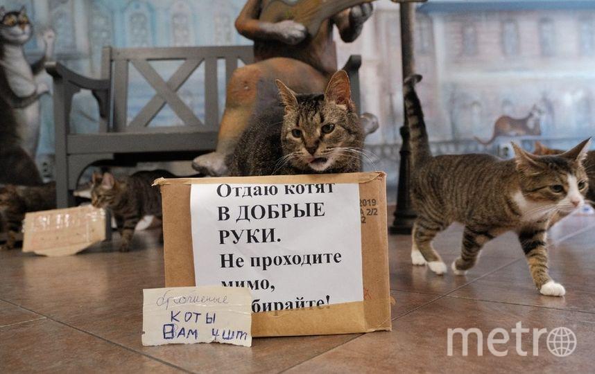 """Во время монтажа коты помогали сотрудникам расставлять коробки. Фото Алена Бобрович, """"Metro"""""""