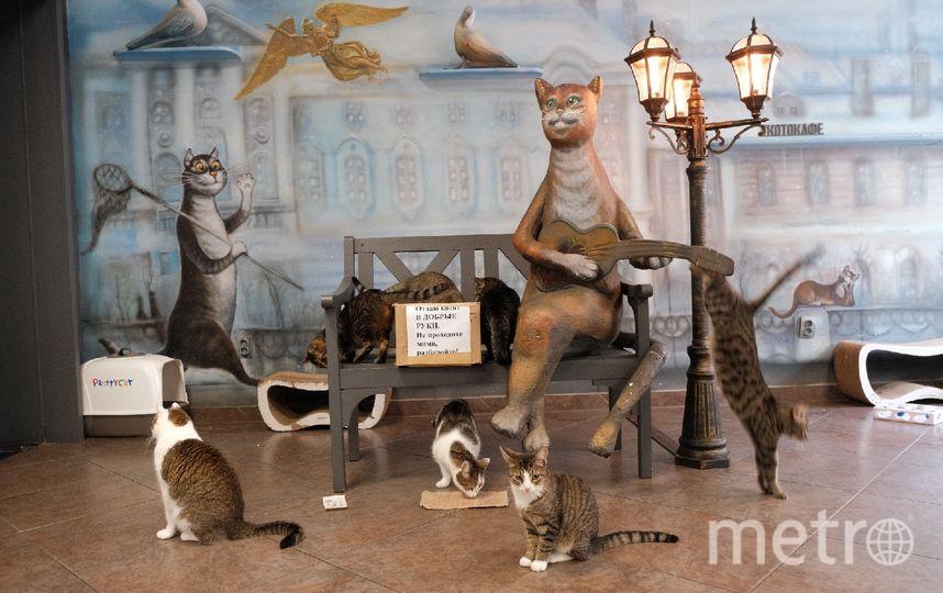 """Обитатели «Республики котов» внимательно «изучили» каждую записку. Фото Алена Бобрович, """"Metro"""""""