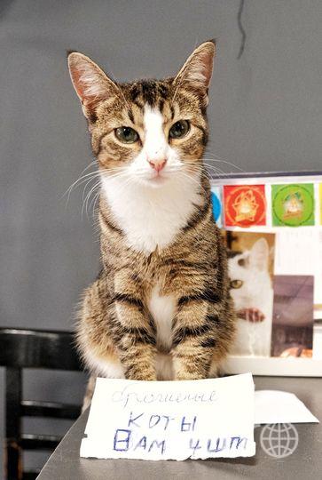 """Брошенные коты из """"Республики котов"""". Фото Алена Бобрович, """"Metro"""""""