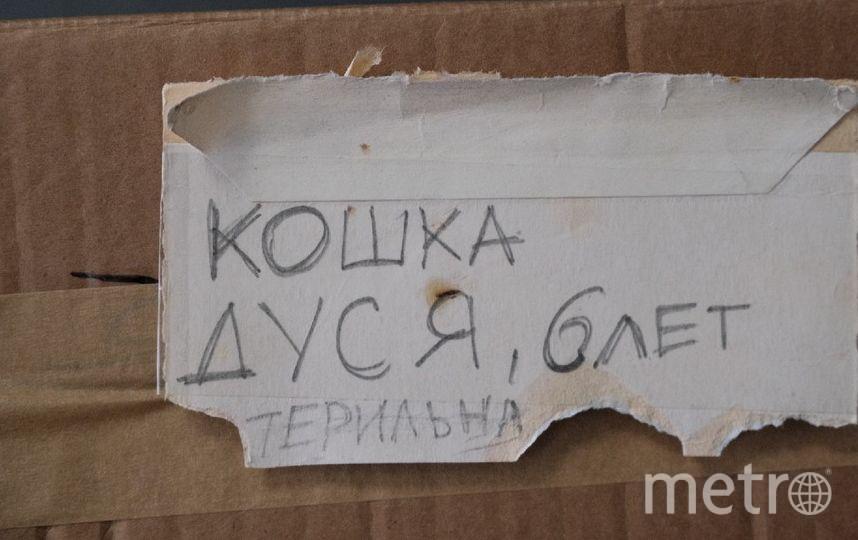 """Выставка открылась в """"Республике котов"""". Фото Алена Бобрович, """"Metro"""""""