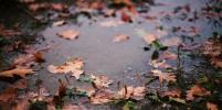 Циклон несёт в Новосибирск новые дожди
