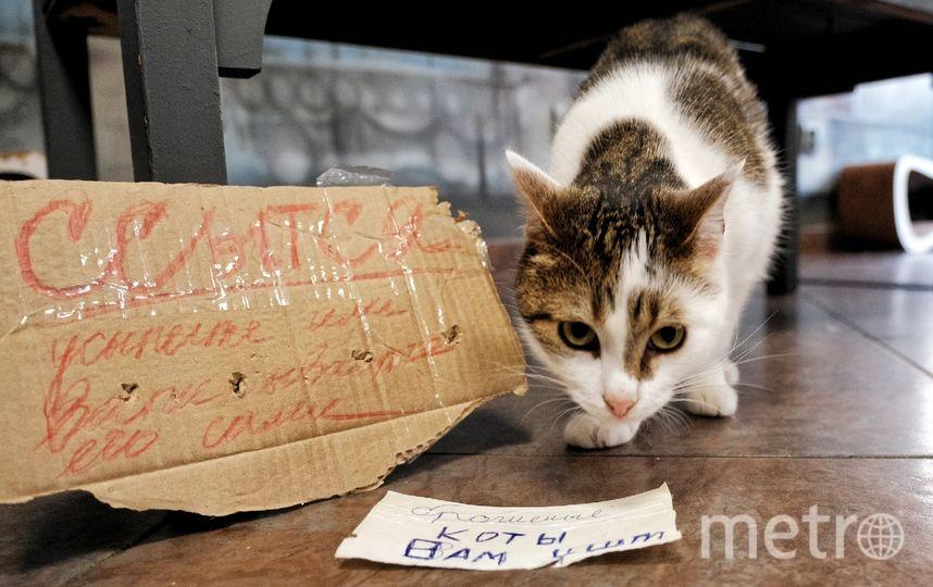 "Кошка Лёля. Фото ""Metro"""