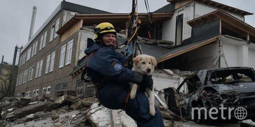 Собака, щенком подобранная с подмосковной свалки, теперь будет спасать людей в Германии