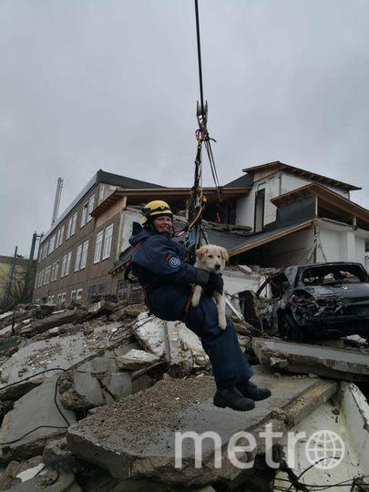 Бьюти – гражданка Германии, спасатель. Фото  instagram @komanda_ronda