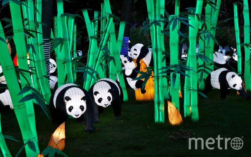 Фестиваль фонариков. Фото https://vk.com/chinafest_spb, vk.com