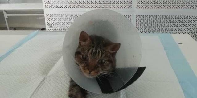 Кот на реабилитации.